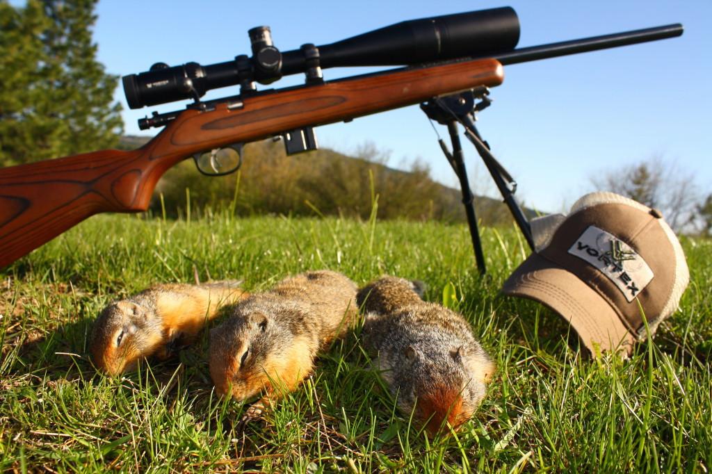 Hunted Ground Squirrel Catch